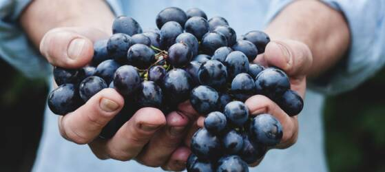 Grapes of Toro