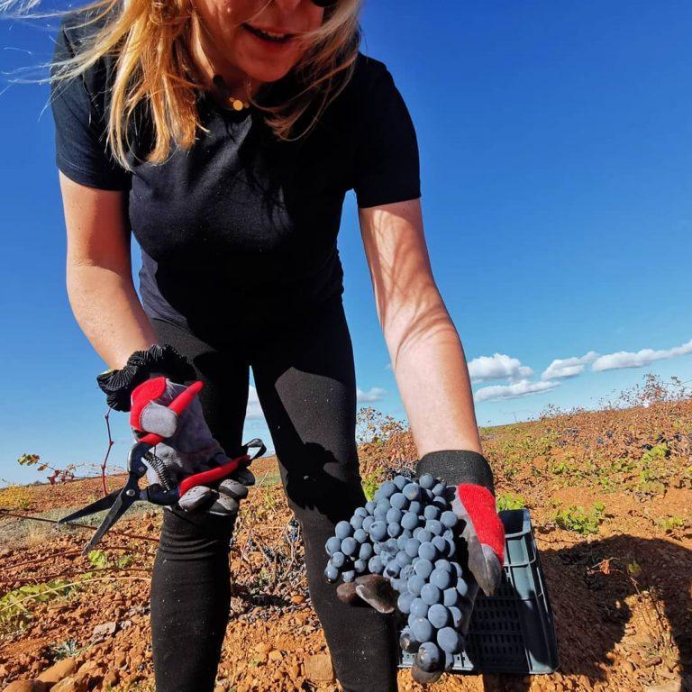 See Vineyards Up Close